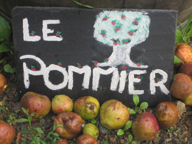 pommier-photo-damien